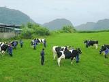 GTNFoods đang sở hữu 75% cổ phần Tổng công ty Chăn nuôi Việt Nam (Vilico). Ảnh minh họa: VTC