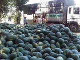 Nông sản Việt Nam xuất sang Trung Quốc chịu nhiều tác động bởi dịch do virus Corona chủng mới (Ảnh minh họa - Nguồn: Internet)