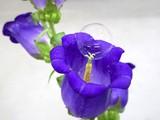 Hoa có thể được thụ phấn thông qua những quả bong bóng này. Ảnh: Digital Trends