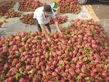 Áp lực lớn cho chính sách tiền tệ Việt Nam trong mùa dịch