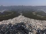 Hóa chất Redoxy 3C được Công ty Thoát nước Hà Nội dùng xử lý sự cố cá chết hàng loạt gây ô nhiễm nước hồ Tây - Ảnh: T.Đ.H