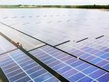 Dự án Nhà máy năng lượng mặt trời Phù Mỹ (Nguồn: BCG)