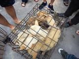 Ăn thịt chó, mèo từ lâu đã là vấn đề gây tranh cãi ở Trung Quốc (Ảnh: SCMP)