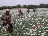 Binh sĩ Mỹ đi qua một cánh đồng thuốc phiện ở Afghanistan (Ảnh: Military)