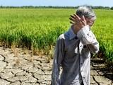 Nông dân khóc ròng trong hạn mặn 2020. Ả: Vietnamnet