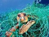 Một con rùa biển mắc kẹt trong một chiếc lưới nhựa bị vứt bỏ dưới đáy biển. Ảnh: National Geographic