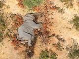 Điều tra nguyên nhân gây ra cái chết bí ẩn của những con voi ở Botswana. Ảnh: CNN
