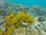 Một rạn san hô ở đại dương. Ảnh: Nasa