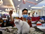 Những con mèo có thể lây nhiễm virus corona cho nhau (Ảnh: Nature)