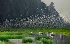 Chim chóc tụ tập trên khu bảo tồn Vân Long