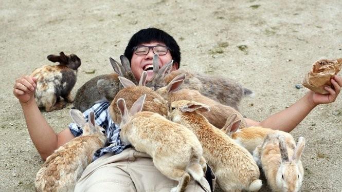 Cậu bé thích thú nằm xuống để các con thỏ quây quanh - Ảnh: Paul Brown/Daily Mail