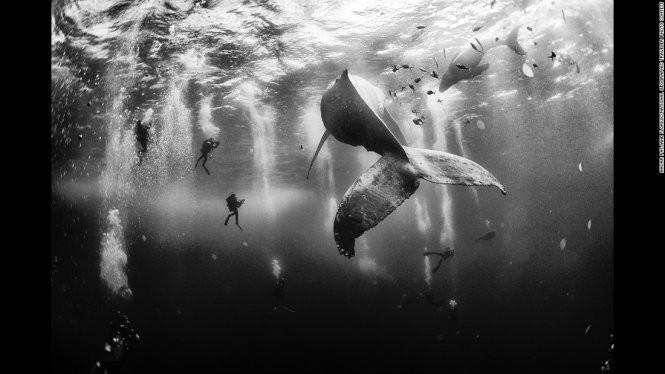 Bức ảnh đoạt giải nhất của tác giả Anuar Patjane - Ảnh: National Geographic