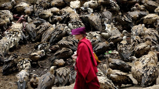 Người Tây Tạng không chôn cất xác chết mà mời chim kền kền đến ăn để linh hồn người thân được lên trời.