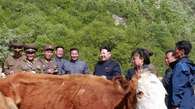 Ông Kim Jung Un trong một buổi thị sát ở nông trường chăn nuôi của Triều Tiên