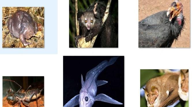 Những loài vật đáng sợ nhất thế giới. Nguồn: List 25