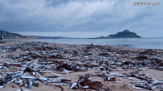 Hiện tượng cá chết hàng loạt ở bờ biển Tokyo, Nhật Bản.