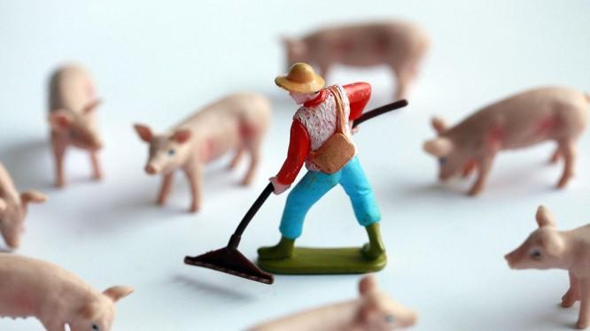 Các công ty công nghệ Trung Quốc tham gia chăn nuôi heo. Ảnh: Zhihu