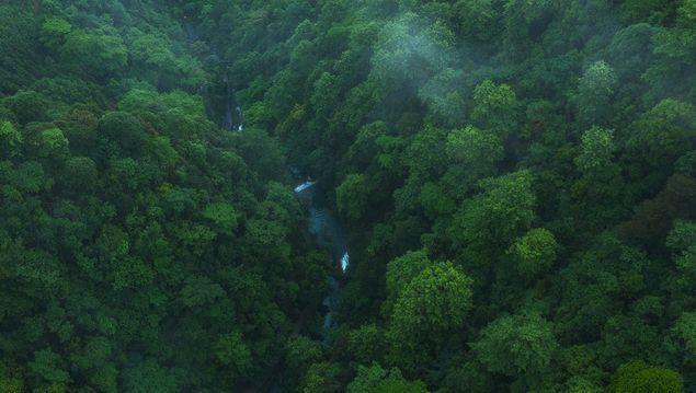 Amazon là khu rừng nhiệt đới lớn nhất thế giới, cung cấp lượng oxy khổng lồ cho sự sống trên trái đất. Ảnh: NetEase