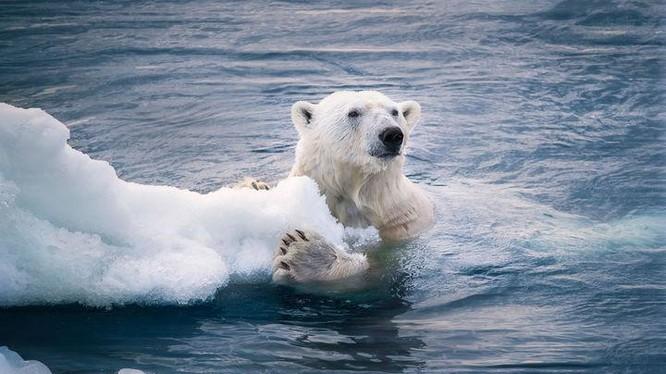 Hiện tượng băng tan do ảnh hưởng bởi biến đổi khí hậu. Ảnh: Zhihu