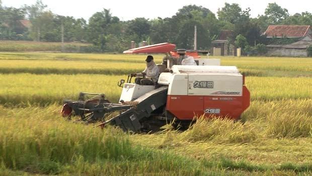 Nông dân Nam Đàn thu hoạch lúa hè thu 2018 (Nguồn: nghean.gov.vn)