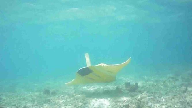 Hình ảnh thiết bị lặn phỏng sinh cá Đuối hoạt động dưới đáy biển (Ảnh: 163).