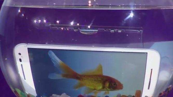 Không giống như cá, điện thoại dễ dàng bị hư hỏng khi rơi vào nước