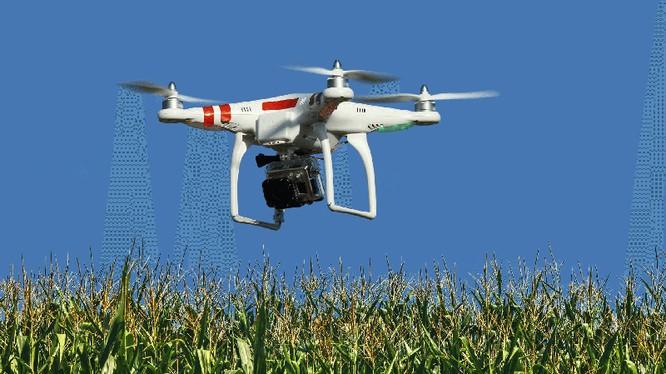 Một chiếc drone đang thu thập thông tin để phân tích cánh đồng ngô. Ảnh: Dronetechnews