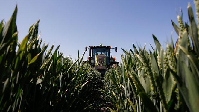 Áp dụng AI sẽ giúp Monsanto rút ngắn thời gian xác định phân tử hiệu quả cao ẢNH: AFP