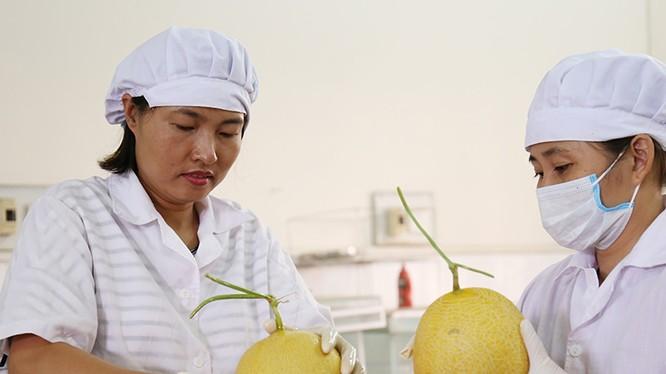 Các cán bộ của Viện Nghiên cứu rau - quả đang sử dụng chế phẩm nano bạc của Công ty STV Nano - sản phẩm tham dự Techfest 2017 - để bảo quản trái cây. Ảnh: Bích Ngọc