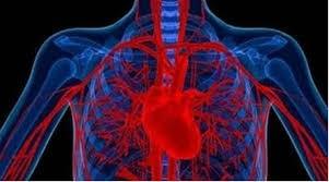 Các tế bào khối u lưu thông (circulating tumor cells - CTC) là các tế bào được giải phóng từ tổn thương khối u nguyên phát vào hệ thống mạch máu hoặc hệ bạch huyết của người bệnh - Ảnh: indianexpress.com