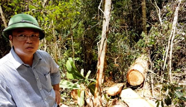 Ông Lê Trí Thanh, Phó Chủ tịch UBND tỉnh Quảng Nam tại hiện trường vụ phá rừng pơ mu quy mô lớn chưa từng có
