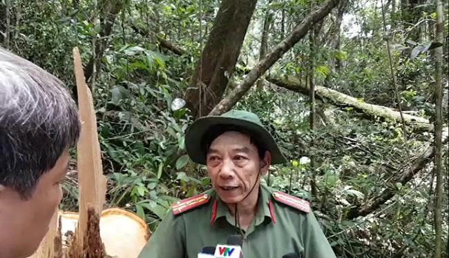 Đại tá Nguyễn Viết Lợi chỉ đạo trực tiếp điều tra vụ phá rừng pơ mu lớn nhất Quảng Nam ngay tại hiện trường