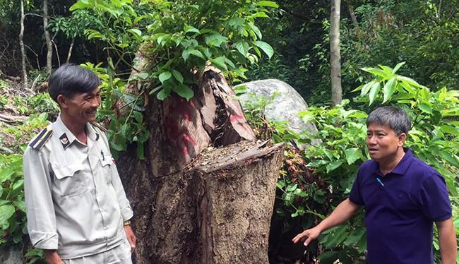 Chi Cục Kiểm lâm TP Đà Nẵng vừa có Quyết định khởi tố vụ án hình sự đối với vụ phá rừng tại tiểu khu 63, Khu Bảo tồn thiên nhiên Sơn Trà (phường Thọ Quang, quận Sơn Trà, TP Đà Nẵng)