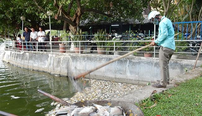 Sau khi tình trạng cá chết liên tiếp xảy ra tại hồ Công viên 29/3, UBND TP Đà Nẵng đã phê duyệt kinh phí hơn 15,3 tỷ đồng nạo vét bùn đối với hồ này.
