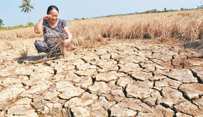 Bộ Tài chính kiến nghị thực hiện hỗ trợ toàn bộ chi phí bảo hiểm cho cây lúa, cà phê đối với hộ nghèo, cận nghèo