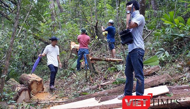 Tỉnh ủy Quảng Nam vừa có quyết định kỷ luật 3 tổ chức Đảng và 7 cá nhân liên quan đến vụ phá rừng Pơ mu tại khu vực biên giới tỉnh Quảng Nam-Lào