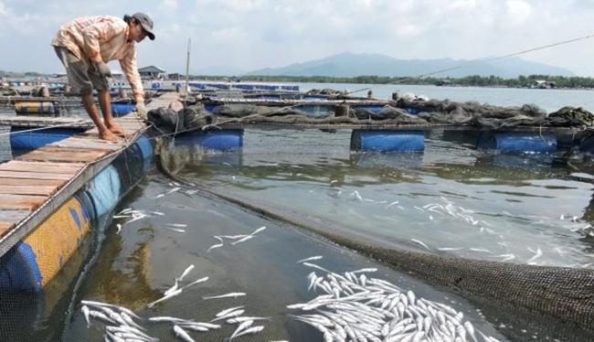 TAND TP Vũng Tàu vừa tuyên án buộc 11 doanh nghiệp chế biến hải sản tại Tân Hải bồi thường cho các hộ nuôi cá lồng ở Long Sơn số tiền hơn 13,2 tỷ đồng vì hành vi xả thải.