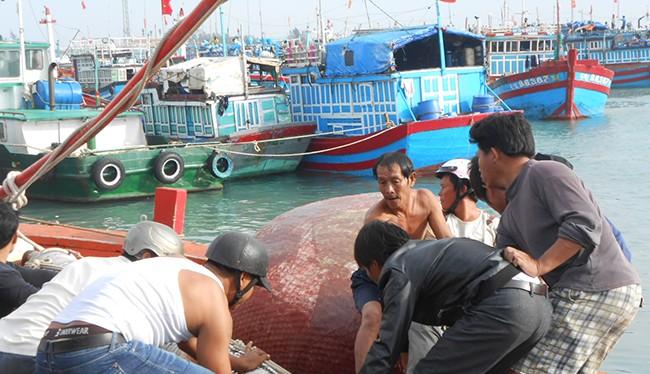 Ngư dân Lý Sơn phần khởi chuẩn bị ngưu lưới cụ để mở biển đầu năm