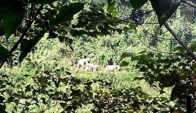 Sáng 7/9, Bộ NN&PTNT phối hợp cùng UBND tỉnh Quảng Nam tổ chức công bố quyết định thành lập Khu bảo tồn loài và sinh cảnh voi tại huyện Nông Sơn (Quảng Nam)