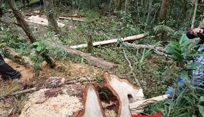 Quảng Nam khẩn trương điều tra vụ phá rừng phòng hộ theo chỉ đạo của Thủ tướng