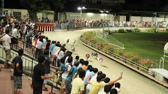Đà Nẵng dành 580.000m2 quỹ đất làm trường đua chó, đua ngựa ở quận Cẩm Lệ (ảnh minh họa vntrip.vn)