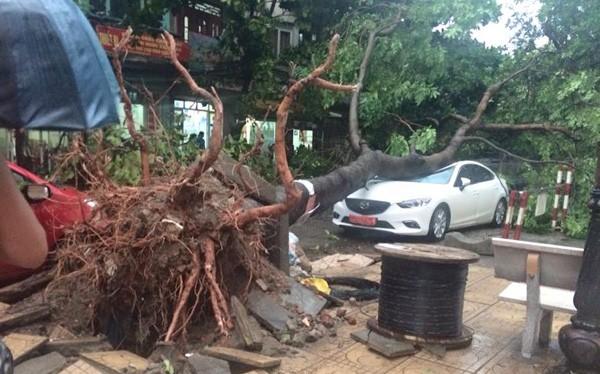 Cây lớn bị quật đổ, đè bẹp ô tô. Ảnh: Trần Sỹ Thuần - Otofun