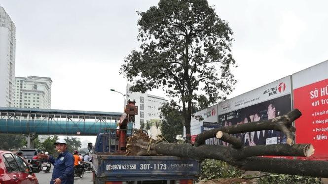 Chặt hạ cây xanh vừa qua ở Hà Nội