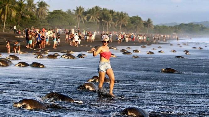 Du khách chứng kiến cảnh tượng kỳ thú khi hàng trăm ngàn con rùa biển ào ạt đổ vào bờ để đẻ trứng trong vòng vài ngày.
