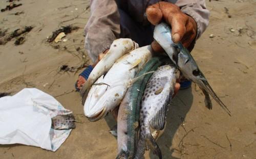 Hiện tượng cá chết hàng loạt chưa rõ nguyên nhân đang gây bất an dư luận