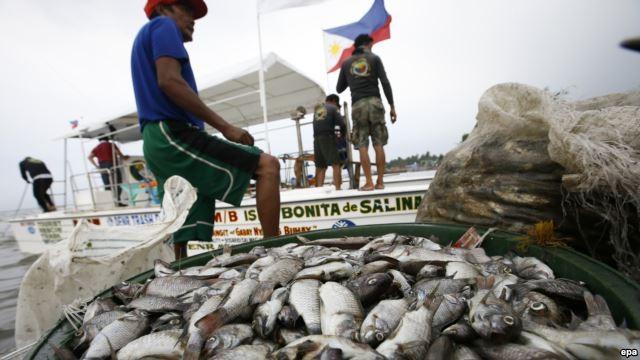 Ngư dân Philippines đứng bên cạnh các xô đầy cá chết ở thị trấn Rosario, tỉnh Cavite, phía nam Manila, Philippines. Nhóm KAI cáo buộc rằng họ đã tìm thấy bằng chứng các tàu đánh cá Trung Quốc đổ hóa chất xuống biển gần quần đảo Trường Sa để gây hại đến ng
