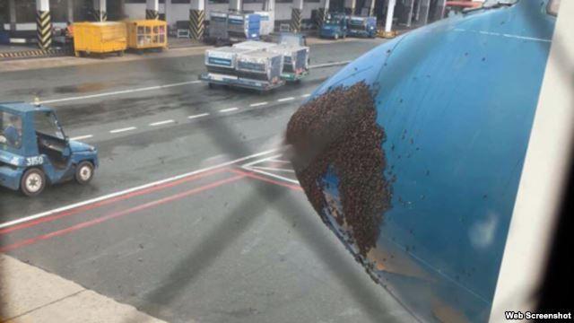 Hàng ngàn con ong bu đen đầu máy bay ở sân bay Tân Sơn Nhất