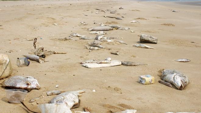 Xót xa cảnh cá chết ở 4 tỉnh miền Trung