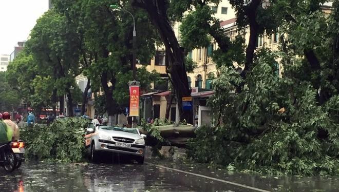Một cây xanh cỡ lớn đổ chắn ngang đường Hai Bà Trưng đè lên ô tô.