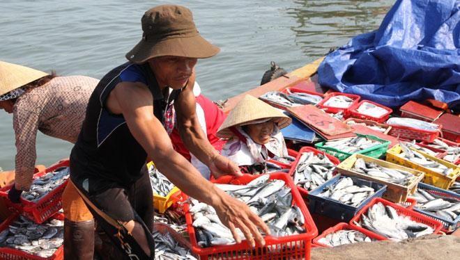 Người dân vẫn chưa rõ cá 4 tỉnh miền Trung sau sự cố môi trường Formosa đã ăn được hay chưa